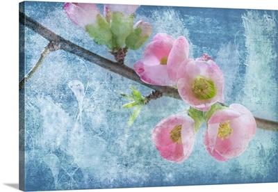 Flowering Quince III