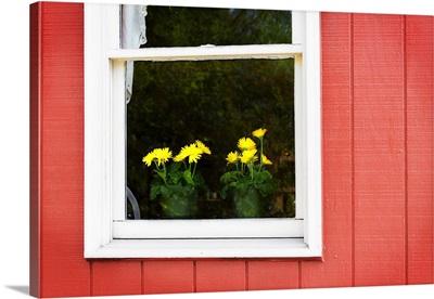 Flowers in a Window II