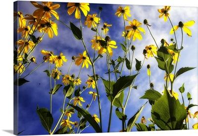 Flowers in the Sun I