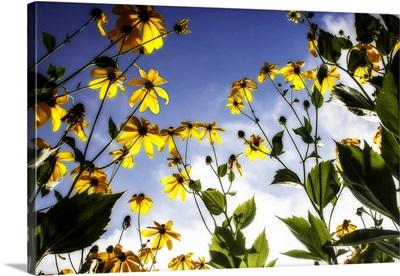 Flowers in the Sun II