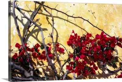 Flowers of Carmel I