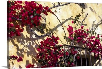 Flowers of Carmel II
