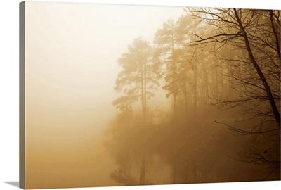 Fog on Shelly Lake I