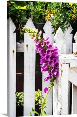 Foxglove on a Fence
