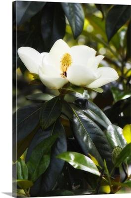 Fragrant Flower I
