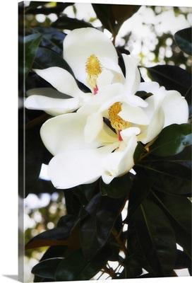Fragrant Flower II