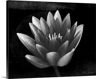 Glowing Lotus II