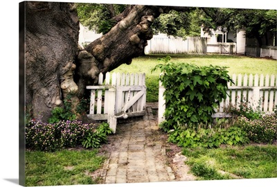 Grandfather Tree II