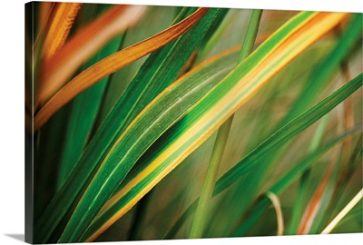 Grass in Fall I