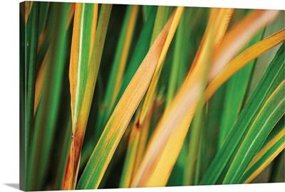 Grass in Fall II