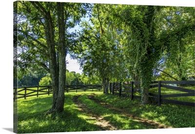 Green Springs Farm IV