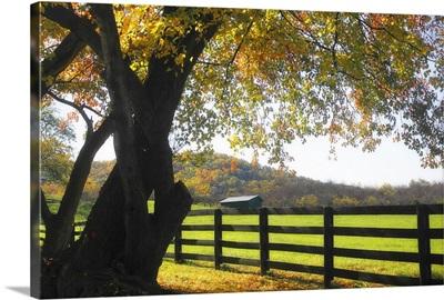 Hillside Farm II