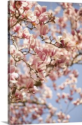 In Bloom III