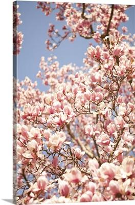 In Bloom IV