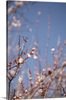In Bloom IX