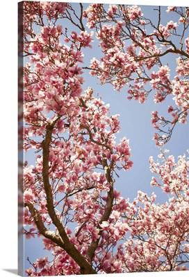 In Bloom V