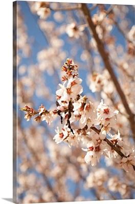 In Bloom VIII