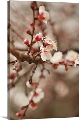 In Bloom XI