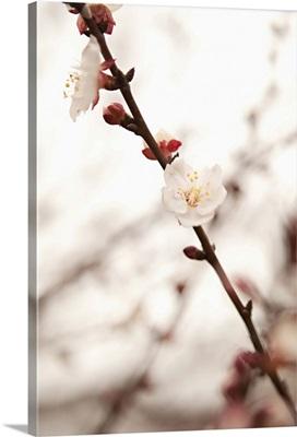 In Bloom XIII