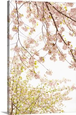In Bloom XIX
