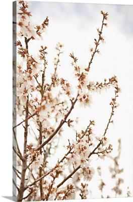 In Bloom XV