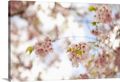 In Bloom XVI