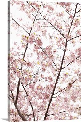 In Bloom XX