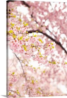 In Bloom XXIII