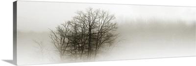 In the Mist II