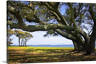 Live Oaks By The Bay II