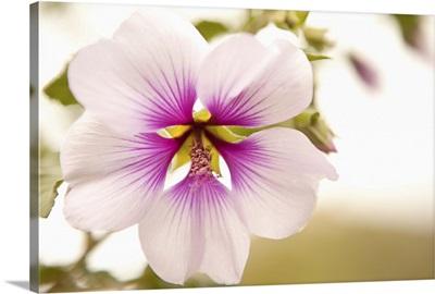Macro Bloom I