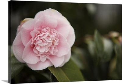 Macro Bloom V