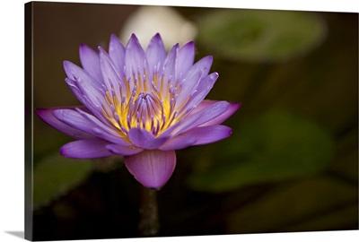 Macro Bloom VI