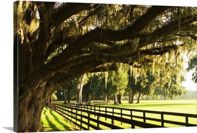 Majestic Oaks 2