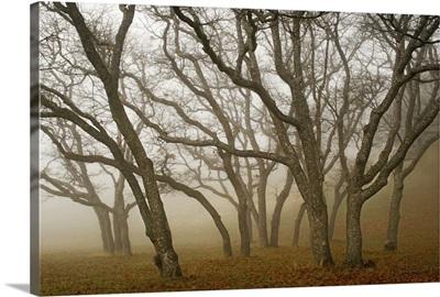 Misty Oaks I