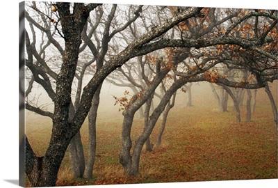 Misty Oaks II