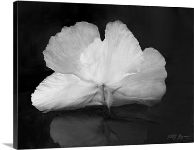 Night Poppy I