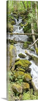 North Cascades National Park VI