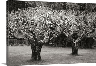 Orchard Serenity I