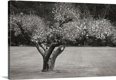 Orchard Serenity II