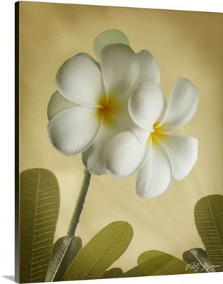 Oriental Plumeria I