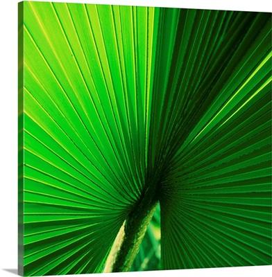 Palm Frond I