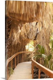 Palm Pathway I