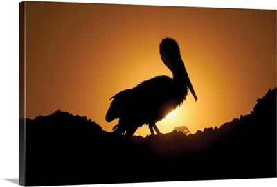 Pelican Silhouette I