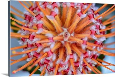 Pincushion Explosion