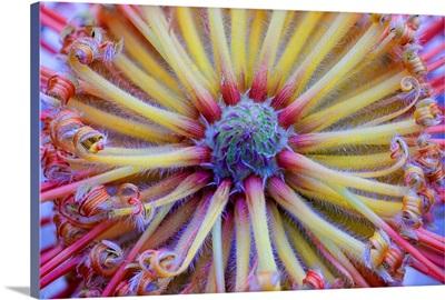 Pincushion Symmetry