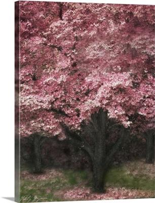 Pink Dogwood III