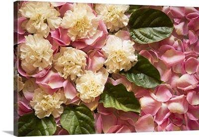 Pink Petals I