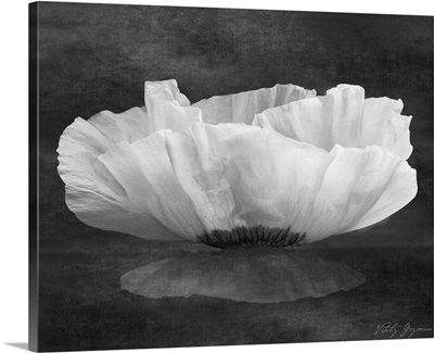 Poppy Mirage