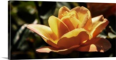 Queen of Flowers I